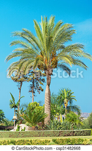 Palm tree in the park. - csp31482668