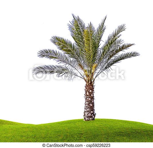Palm tree isolated on white background - csp59226223
