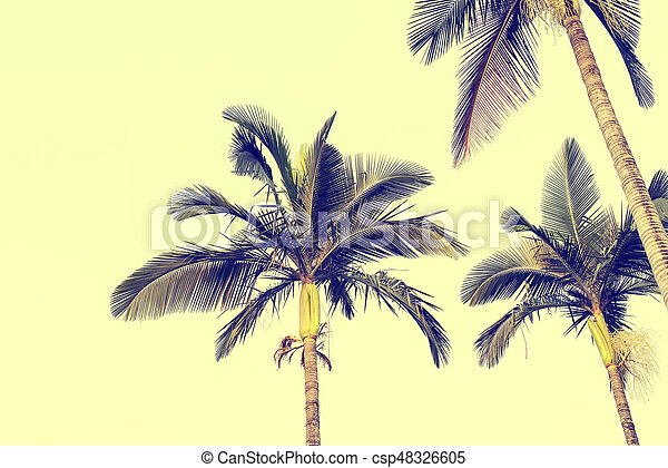 palm tree isolated on white background - csp48326605