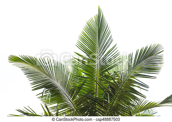 palm tree isolated on white background - csp48887503