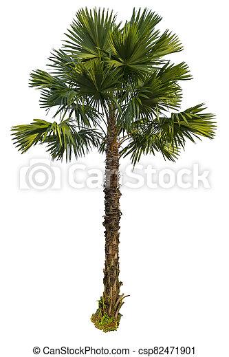 Palm tree isolated on white background - csp82471901