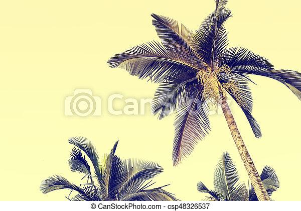 palm tree isolated on white background - csp48326537