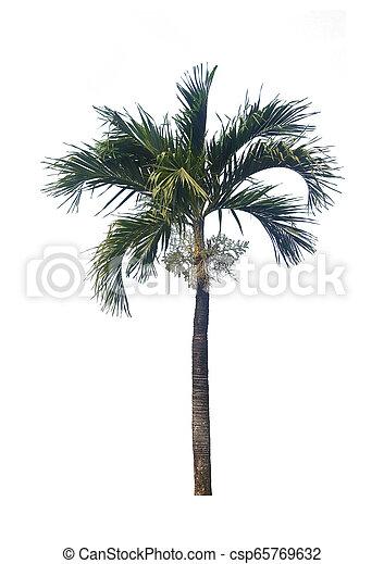 palm tree isolated on white background - csp65769632
