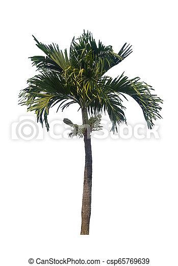 palm tree isolated on white background - csp65769639