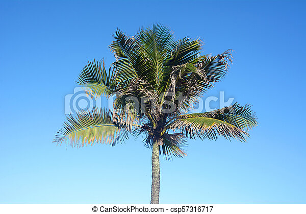 Palm tree on a sunny day. - csp57316717