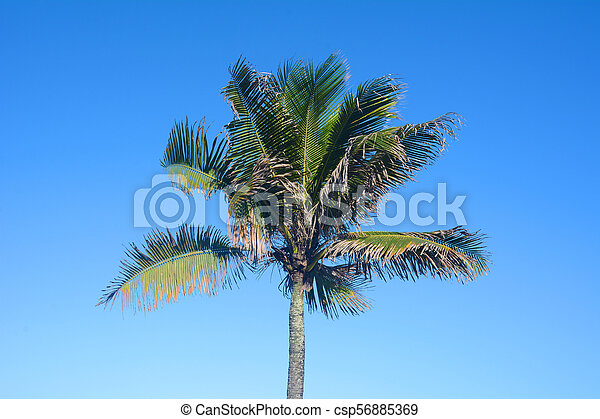 Palm tree on a sunny day. - csp56885369