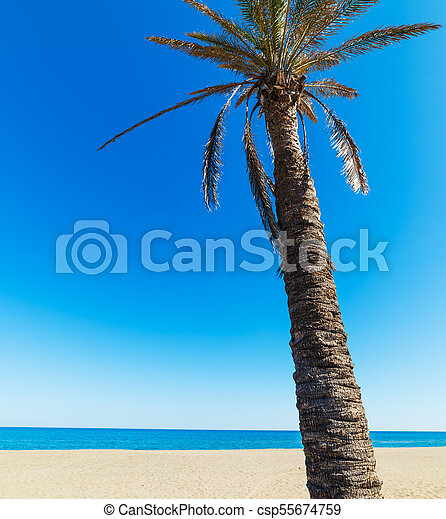 Palm tree on a sunny day - csp55674759