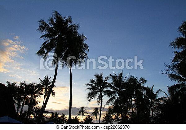 Palm tree - csp22062370
