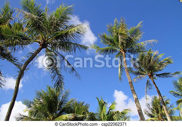 Palm tree - csp22062371