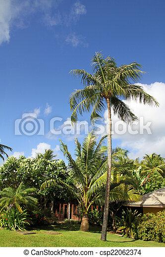 Palm tree - csp22062374
