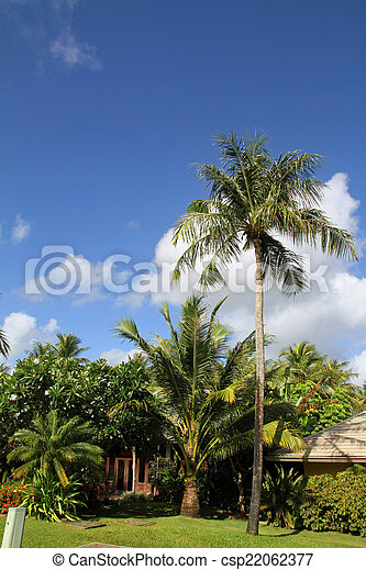 Palm tree - csp22062377