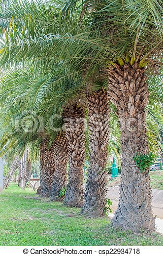 palm tree - csp22934718