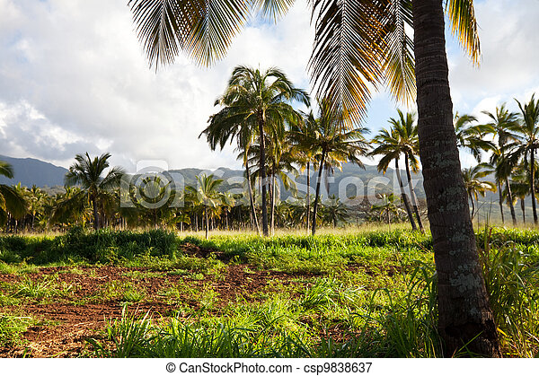 Palm-tree - csp9838637