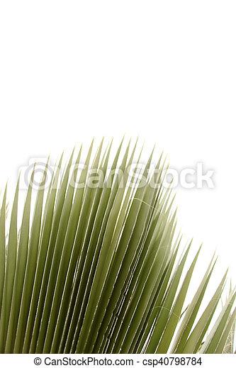 Palm Tree - csp40798784