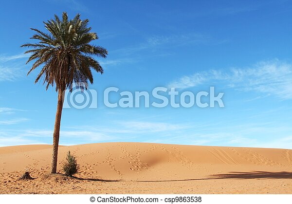 Palm-tree - csp9863538