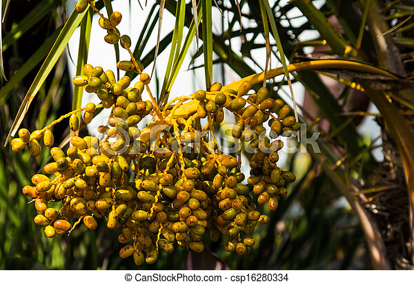 Palm tree seeds bunch of yellow palm tree seeds palm tree seeds csp16280334 mightylinksfo