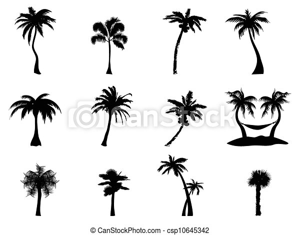 palm tree Silhouette - csp10645342