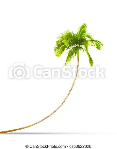 palm tree - csp3622828