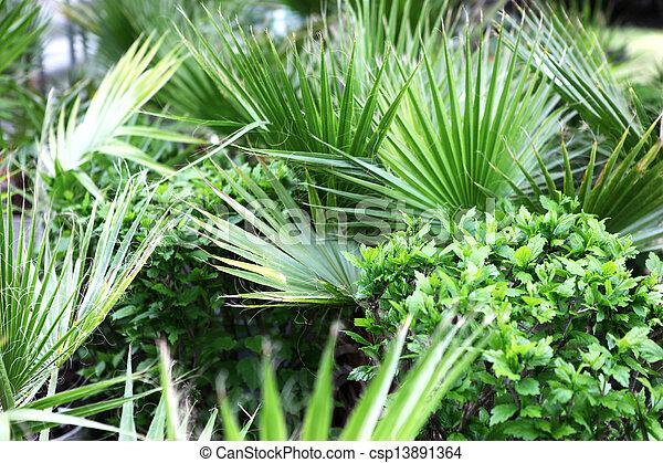 palm tree - csp13891364