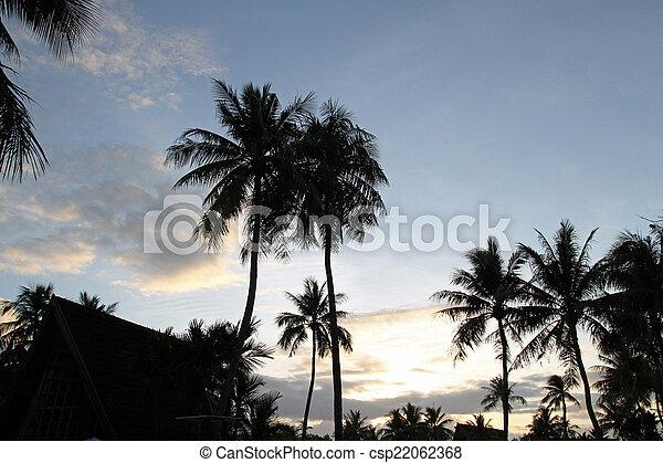 Palm tree - csp22062368