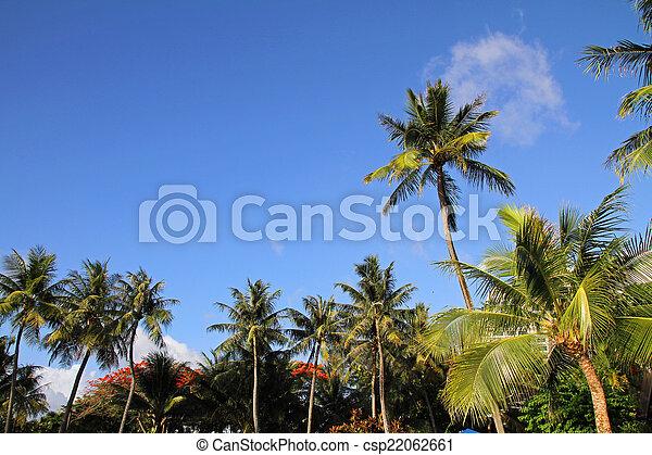 Palm tree - csp22062661
