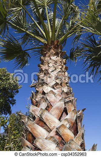 palm tree - csp34352963