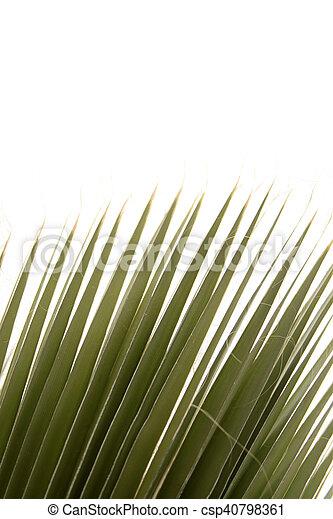 Palm Tree - csp40798361
