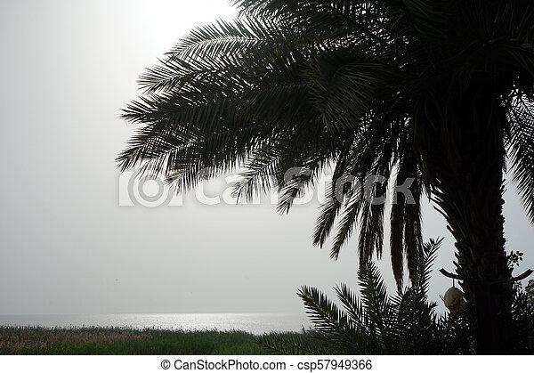 Palm tree - csp57949366