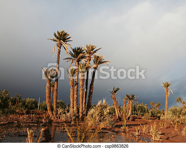Palm-tree - csp9863826