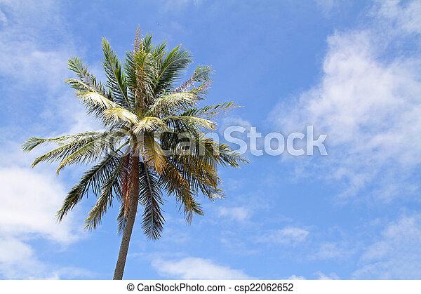 Palm tree - csp22062652