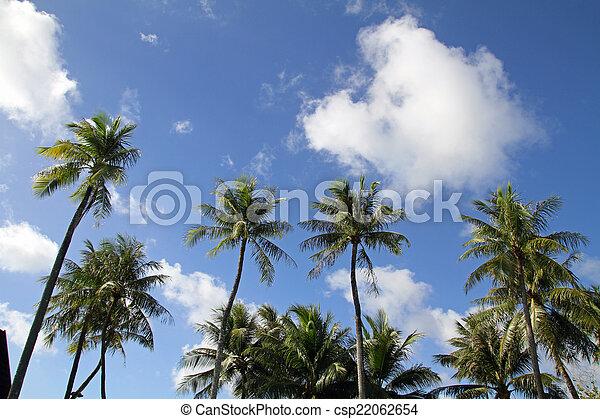 Palm tree - csp22062654