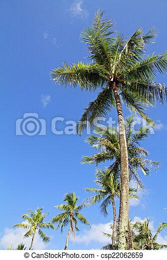 Palm tree - csp22062659