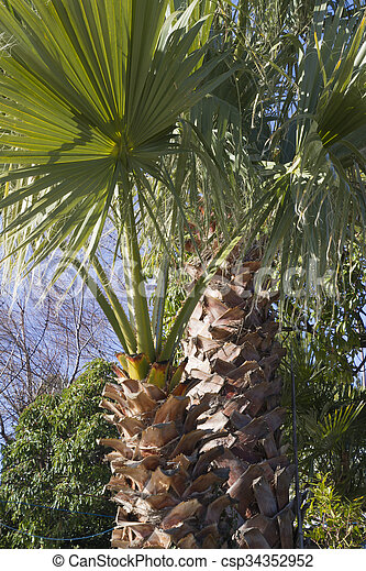 palm tree - csp34352952
