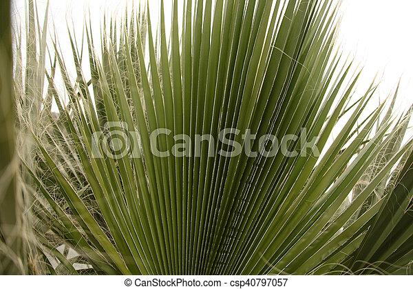 Palm Tree - csp40797057