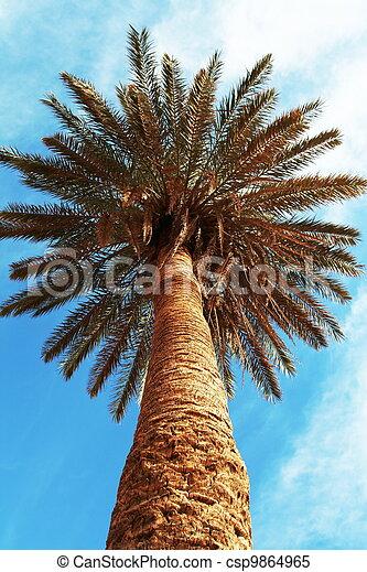 Palm-tree - csp9864965