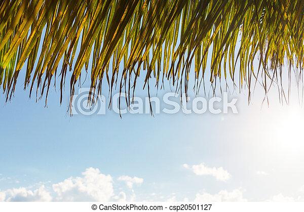 Palm tree - csp20501127