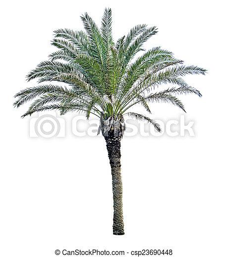 Palm tree - csp23690448