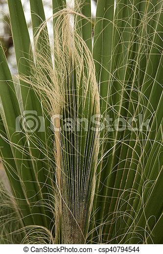 Palm Tree - csp40794544
