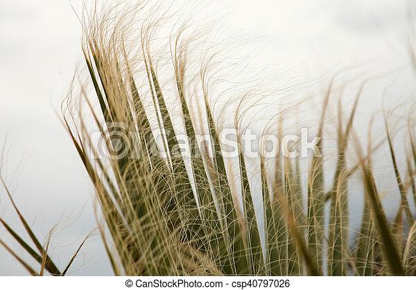 Palm Tree - csp40797026