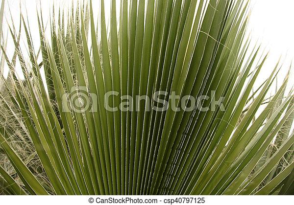 Palm Tree - csp40797125
