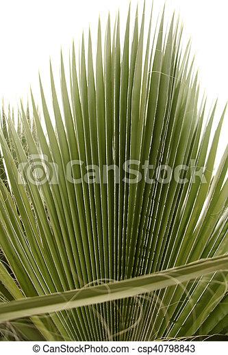 Palm Tree - csp40798843