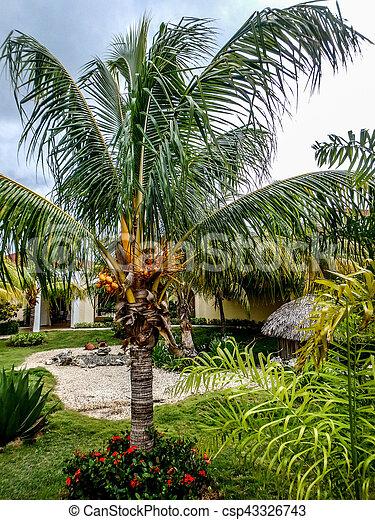 Palm tree - csp43326743