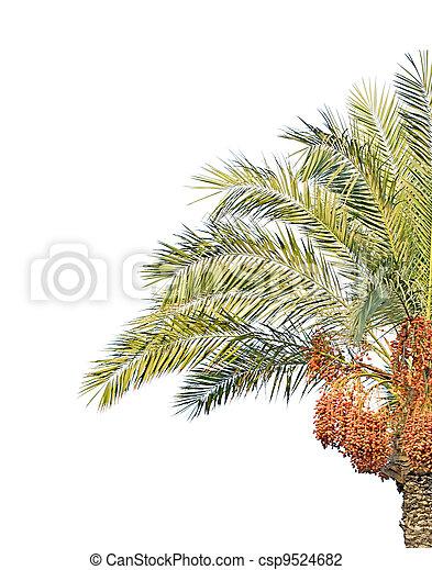 palm tree - csp9524682