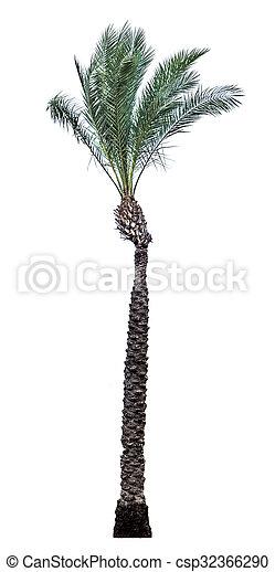 Palm tree - csp32366290