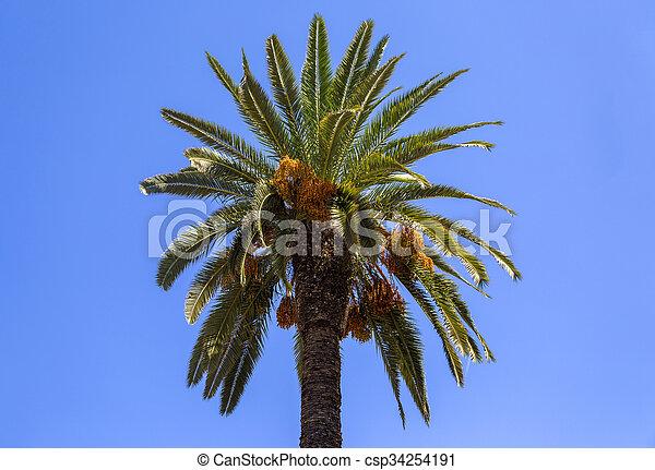 Palm tree - csp34254191