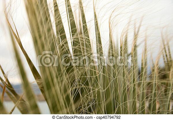 Palm Tree - csp40794792