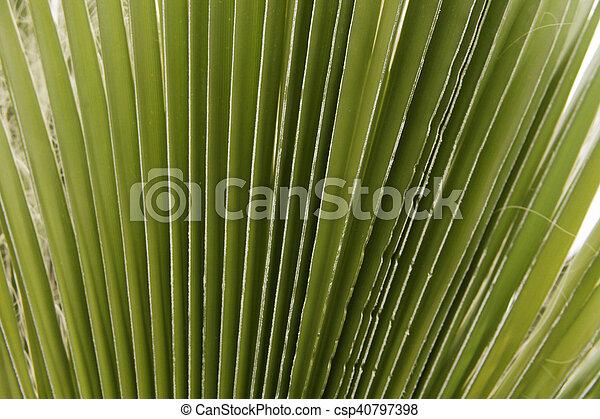 Palm Tree - csp40797398