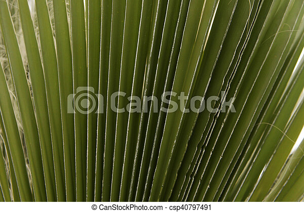 Palm Tree - csp40797491
