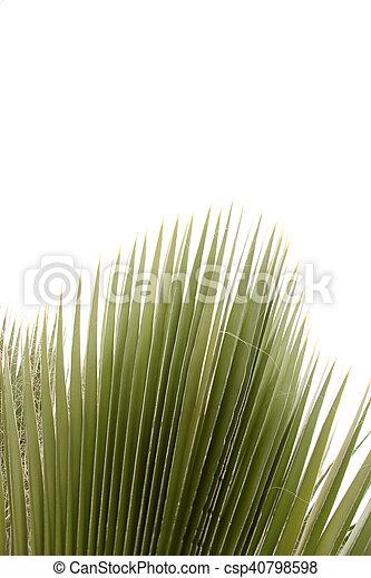 Palm Tree - csp40798598