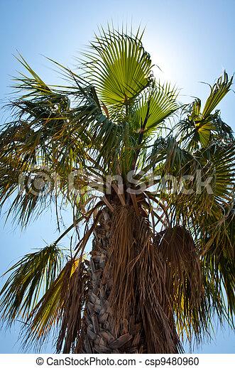 Palm Tree - csp9480960